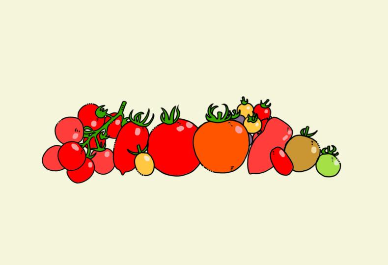 イラスト:トマト